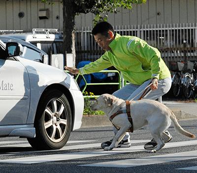 アイメイトと盲導犬の違いSP版|...